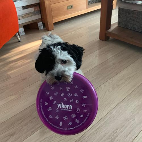 Hope En Haar Frisbee
