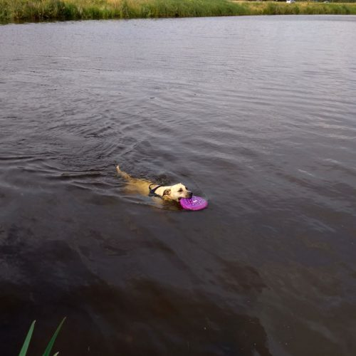 Lola Met Haar Nieuwe Frisbee