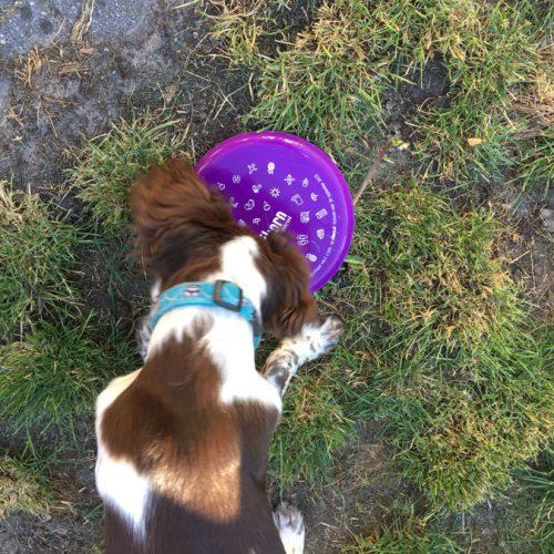 Woezel Met Zijn Frisbee