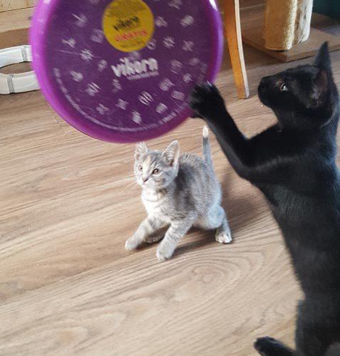 Ondeugende Kittens