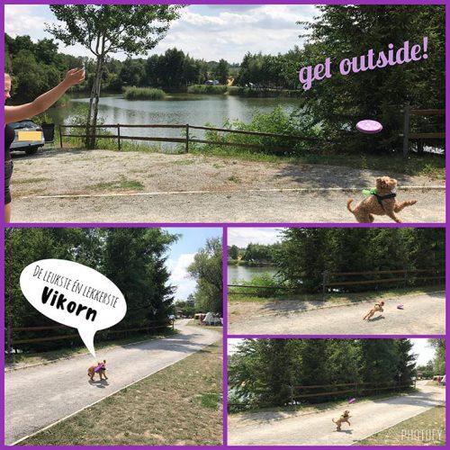 Teddie En De Frisbee